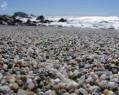 Tapeta Macro Beach