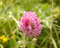 Tapeta Macro Flower