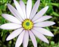 Tapeta Macro Flower 10