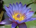 Tapeta Macro Flower 5