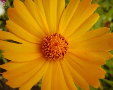 Tapeta: Macro Flower 7