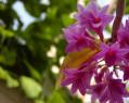 Tapeta Macro Flower 8