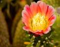 Tapeta Macro Flower 9