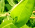 Tapeta Macro Organics