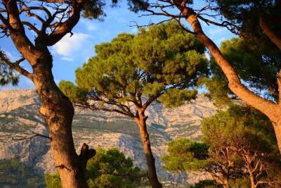 Tapeta: Makarska 1