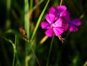 Tapeta MAKRO - Květ v trávě