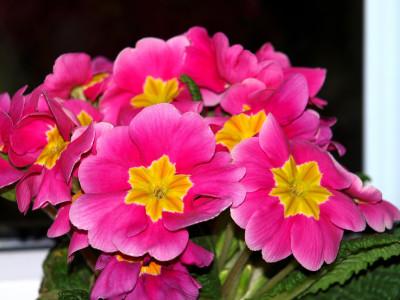 Tapeta: MAKRO Květiny