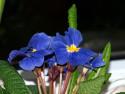 Tapeta MAKRO květiny 1