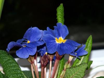 Tapeta: MAKRO květiny 1
