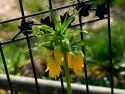 Tapeta Makto - květina