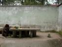 Tapeta Medvědí oběd