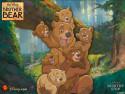 Tapeta Medvědí bratři