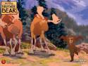 Tapeta Medvědí bratři 5