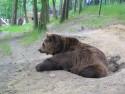 Tapeta Medvídek z večerníčku