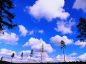 Tapeta Mimoňský les