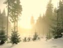 Tapeta Mlha v lese4