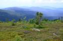 Tapeta modrá šumava