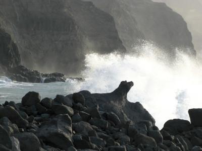 Tapeta: Mořský pes