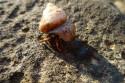 Tapeta mořský živočich