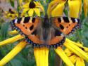 Tapeta Motýl001