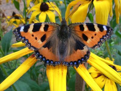 Tapeta: Motýl0101