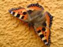 Tapeta Motýl na fasádě