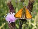 Tapeta Motyl na kvetu 2