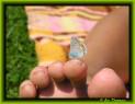 Tapeta Motýl na prstě