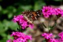 Tapeta motýl v zahrádce