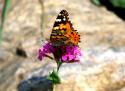 Tapeta motýl v zahrádce 1