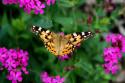 Tapeta motýl v zahrádce 2
