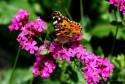 Tapeta motýl v zahrádce 3
