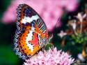 Tapeta Motýlek 3