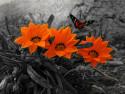 Tapeta motýlek na květině