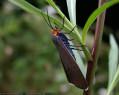 Tapeta Motýlek od Gaia Dream Creation