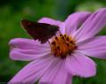 Tapeta Motýlek od Gaia Dream Creation 3