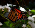 Tapeta Motýlek od Gaia Dream Creation 4