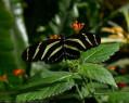 Tapeta Motýlek od Gaia Dream Creation 6