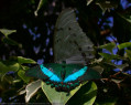Tapeta Motýlek od Gaia Dream Creation 7