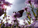 Tapeta Motýl & květina