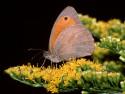 Tapeta Motýl Makro