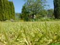 Tapeta trávník jinak