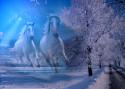Tapeta Mrazivá krása