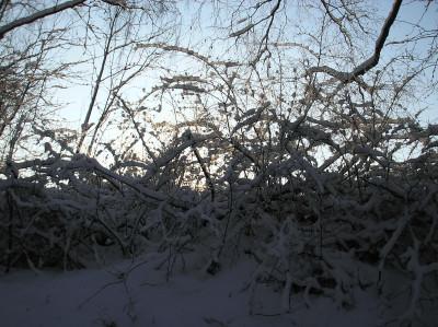 Tapeta: Mrazivé ráno 44