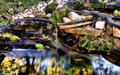 Tapeta: Mystery pond