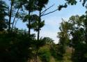 Tapeta Na horách je krásně...07