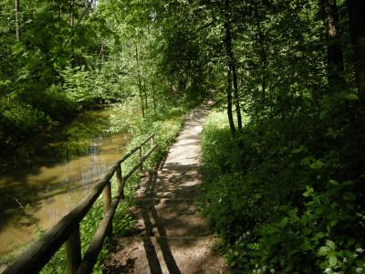 Tapeta: Na samotě v lese