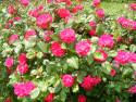 Tapeta Nádherné květy