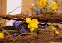 Tapeta Narcisy a modřenec