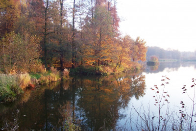 Tapeta: rybník